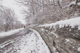 winter-woods-path_4460x4460