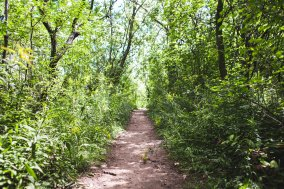 dirt-path-in-trees_4460x4460-1